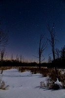 A moonlit snow covered swamp on a crystal clear night (and cold! -8f!)